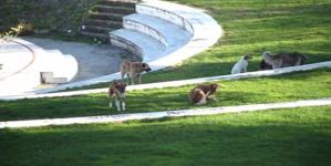Καστοριά: Επίθεση σκύλου σε 12χρονο παιδί στο παρκο Ολυμπιακής Φλόγας