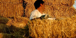Στην εφορία τα αγροτικά εισοδήματα -Τι θα πληρώσουν μισθωτοί και συνταξιούχοι που έχουν γεωργικές δραστηριότητες