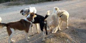 Νέα επίθεση αδέσποτων σκύλων σε γυναίκα στο Άργος Ορεστικό!