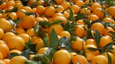 Διανομή φρούτων από τον Δήμο της Καστοριάς
