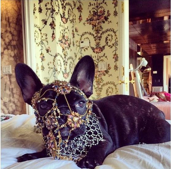 H Lady Gaga κατάφερε να κάνει έξαλλους και τους φιλόζωους -Οι φωτογραφίες της ξεσήκωσαν την PETA [εικόνες]