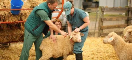 ΚΑΣΤΟΡΙΑ:Ξεκίνησε η Εφαρμογή του Κτηνίατρου Εκτροφής. Οι κτηνοτρόφοι πρέπει να δηλώσουν άμεσα τον κτηνίατρο επιλογής τους