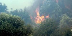 Πεύκος: Μεγάλη φωτιά σε εξέλιξη αυτήν την ώρα – Εκρήξεις από σφαίρες και βλήματα δυσχεραίνουν το έργο των πυροσβεστών