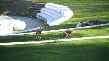 Συνεχίζονται οι επιθέσεις αδέσποτων σκύλων στην Καστοριά (ρεπορτάζ)