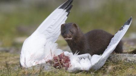 Καταπολέμηση των χωροκατακτητικών ξένων ειδών