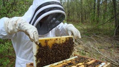 Καστοριά: Ταχύρυθμη εκπαίδευση μελισσοκόμων