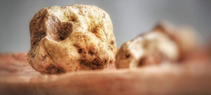 truffle2-708.jpeg