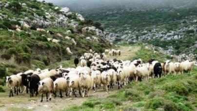 ΠΕ Καστοριάς: Κάλεσμα Κτηνοτρόφων για Κατανομή βοσκοτόπων 2018