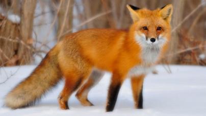 Φιλόζωοι αντιδρούν στη νέα τάση γούνα από κυνήγι