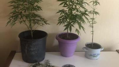 Καστοριά: Σύλληψη 27χρονου και 25χρονου για κατοχή και καλλιέργεια ναρκωτικών (φωτο)