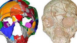 Σημαντική ανακάλυψη: Στην Ελλάδα βρέθηκε το αρχαιότερο δείγμα Homo Sapiens στην Ευρασία