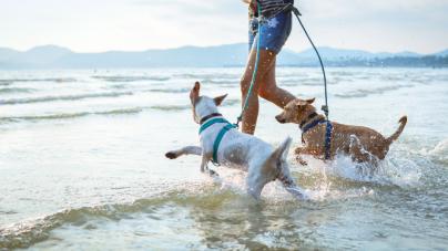 Τι πρέπει να προσέχουμε όταν παίρνουμε τον σκύλο μας στην παραλία