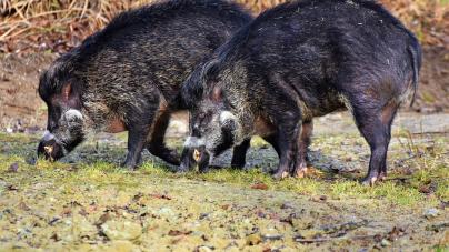 Καστοριά: Μέτρα βιασφάλειας για τους κυνηγούς