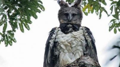 Τρομακτικό: Αυτός ο αετός μοιάζει με άνθρωπο ντυμένο με στολή πτηνού [εικόνες]