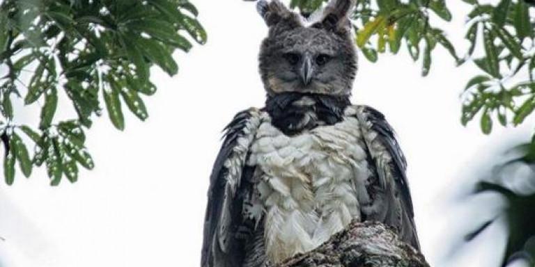 eagle-dentro