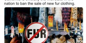 Καλιφόρνια: Η πρώτη πολιτεία των ΗΠΑ που απαγορεύει την πώληση και κατασκευή γούνας