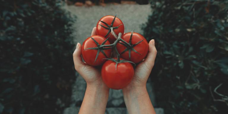 tomatoes-xeria