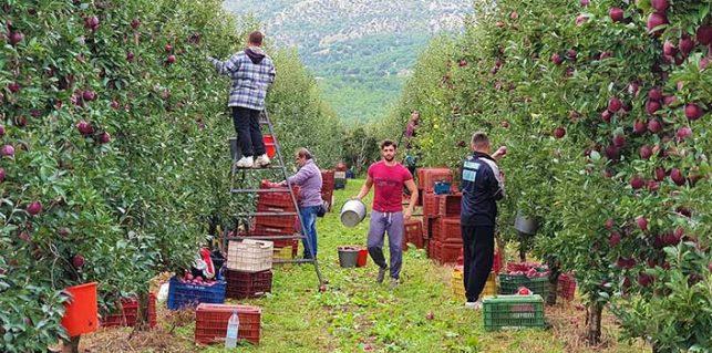 Screenshot_2020-10-07-Αυξημένη-αναμένεται-η-συγκομιδή-μήλων-φέτος-την-Καστοριά-video-OlaDeka.jpg