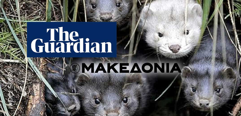 mink-MAKEDONIA-GUARDIAN.jpg